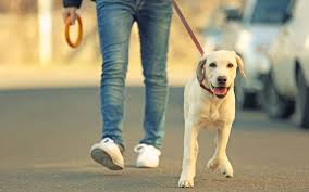 startup ideas dog walking